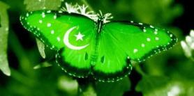 ddos pakistan