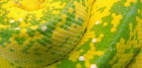 vert emeraude jaune canari dress code trahison